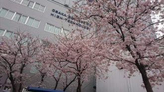 ラスト春の写真